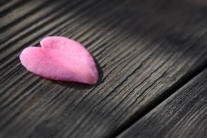 Heart_shaped_flower_petal